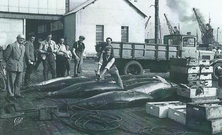 boulogne-sur-mer-debarquement-du-thon-rouge-dans-les-annees-30.jpg