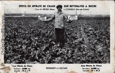 coquelles-effet-du-nitrate-ce-chaux-sur-betteraves-a-sucre-herve-tavernier-calais.jpg