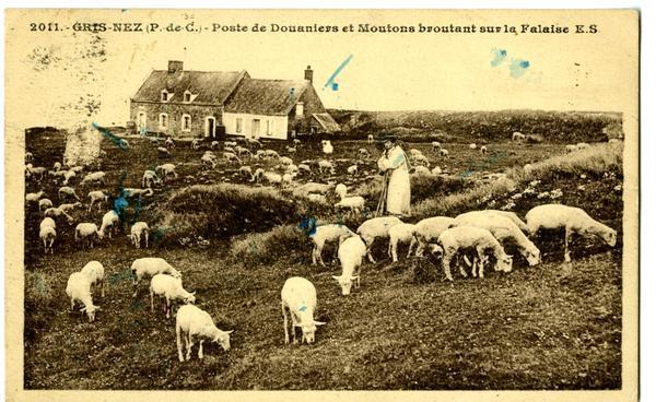 gris-nez-le-poste-de-douaniers-et-moutons-herve-tavernier-calais.jpg