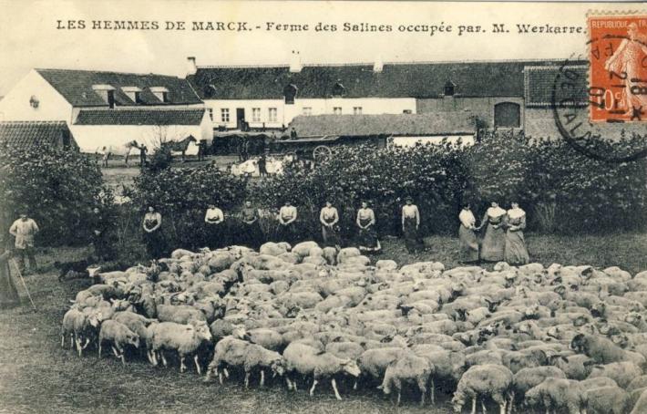 hemmes-de-marck-les-moutons.jpg